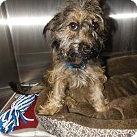 Adopt A Pet :: Lulu - Henderson, NC
