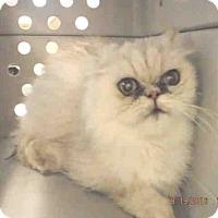 Adopt A Pet :: A570237 - Oroville, CA