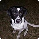 Adopt A Pet :: Pete