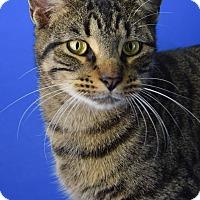 Adopt A Pet :: JoJo - Carencro, LA