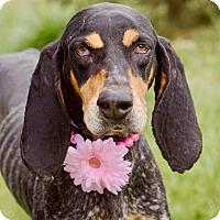 Adopt A Pet :: Sklyer - Urgent! - Zanesville, OH