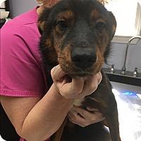 Adopt A Pet :: Jazzie - Billerica, MA