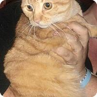 Adopt A Pet :: FRANCES - Corona, CA