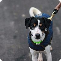 Adopt A Pet :: Rescue Honey - Batavia, NY