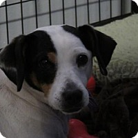 Adopt A Pet :: Abbie - Asheville, NC