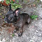 Adopt A Pet :: Mr. Belvedere