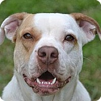 Adopt A Pet :: Penny - Pearland, TX