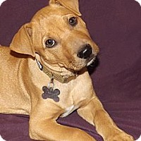 Adopt A Pet :: Aries - Phoenix, AZ
