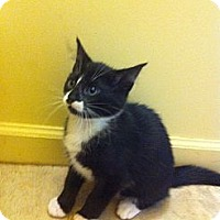 Adopt A Pet :: Tuxie - Piscataway, NJ