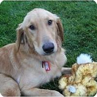 Adopt A Pet :: Jose - Denver, CO