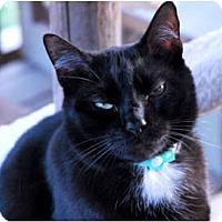 Adopt A Pet :: Shane - Lunenburg, MA