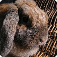 Adopt A Pet :: Darby - Newport, DE