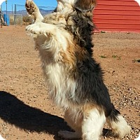 Adopt A Pet :: TJ - Alamogordo, NM