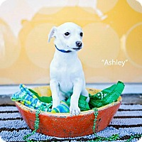 Adopt A Pet :: Ashley Judd - Shawnee Mission, KS