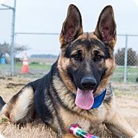 Adopt A Pet :: Metro - Patterson, CA