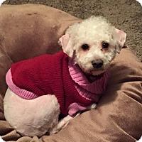 Adopt A Pet :: Ollie - West Allis, WI