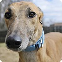 Adopt A Pet :: Pal - Lexington, SC