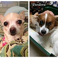 Adopt A Pet :: Lady & Pandora - Pataskala, OH