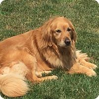 Adopt A Pet :: Autumn - New Canaan, CT