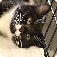 Adopt A Pet :: Clementine - Marietta, GA