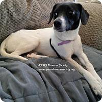 Adopt A Pet :: Miracle - Killeen, TX