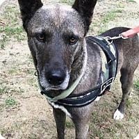Adopt A Pet :: Gideon - Quinlan, TX