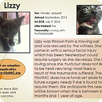 Adopt A Pet :: Lizzy - Mount Gilead, OH