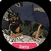 Adopt A Pet :: Darcy - Victorville, CA