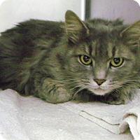 Adopt A Pet :: decem'purr' - Muskegon, MI