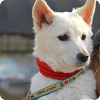 Adopt A Pet :: Jupiter - Smithtown, NY