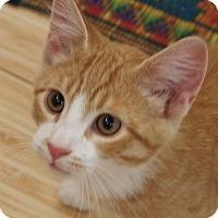 Adopt A Pet :: Sunny Bear - Buhl, ID