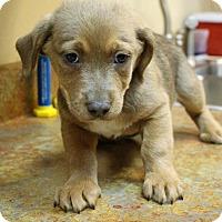 Adopt A Pet :: Moose Tracks - Glastonbury, CT