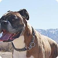Adopt A Pet :: Goliath - Costa Mesa, CA