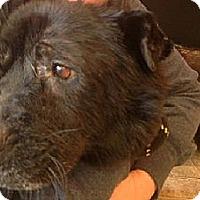 Adopt A Pet :: Patricia - ....., FL