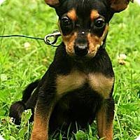 Adopt A Pet :: Mikey - Staunton, VA