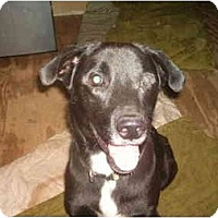 Adopt A Pet :: Hunter - North Jackson, OH