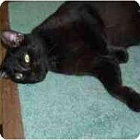 Adopt A Pet :: Ellis - Hamburg, NY