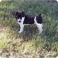 Adopt A Pet :: Mason - Coming to CT 9/16! - Adamsville, TN