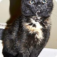 Adopt A Pet :: Faith - Xenia, OH