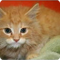 Adopt A Pet :: LUDWIG - SILVER SPRING, MD