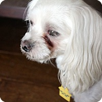 Adopt A Pet :: Brady - Phoenix, AZ