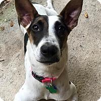 Adopt A Pet :: Keeley - Austin, TX