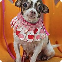 Adopt A Pet :: Franci - Studio City, CA
