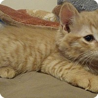 Adopt A Pet :: Charlie - East Brunswick, NJ