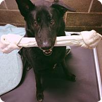 Adopt A Pet :: Darby - Alpharetta, GA
