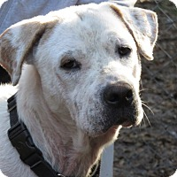 Adopt A Pet :: Barney Rubble ~Easy Going! - St Petersburg, FL