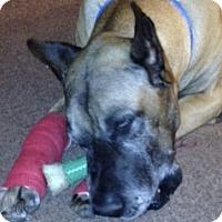 Adopt A Pet :: Bubba - Springfield, IL