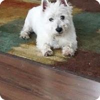 Adopt A Pet :: COCO - Carrollton, TX