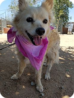 Spaniel (Unknown Type) Mix Dog for adoption in Apple Valley, California - Snuggles