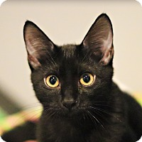 Adopt A Pet :: Hendrix - Lincoln, NE